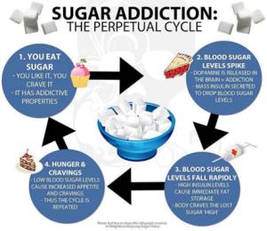 sugar-cycle